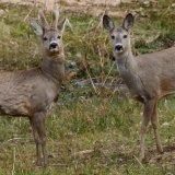 1st Manual on Iran's Wildlife Diseases