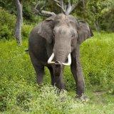 Wild Elephant Kills 2 Women  in Nepal