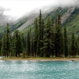 British Columbia Unveils Forest Recovery Plan