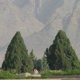 Heritage List Climbs Yazd Cypress Tree