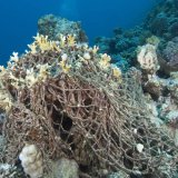 Europe Moves to Tackle Marine Pollution
