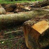 Forest Conservation Bill Taking Effect in Two Years