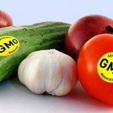 Genetic modification is essential to overcome challenges of food supply.