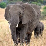 China to Ban Ivory Trade by 2018