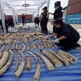15 African Countries Praise China's Ivory Ban