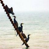 Khuzestan to Host Bird-Watching Tours