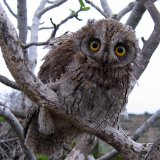 Harry Potter Series Linked to Illegal Owl Trade
