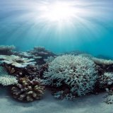 Great Barrier Reef Suffers 2nd Year of Mass Bleaching