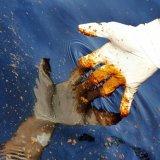 China Starts Massive Oil Spill Cleanup After Tanker Sinks