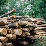 Crackdown on Illegal Logging