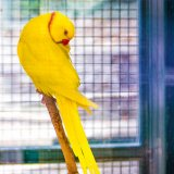 Tehran's Unauthorized Wildlife Facilities Warned