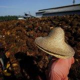 Asean Labor Flows Hit a Wall