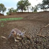 Australia Drought Could Cost $12 Billion