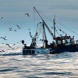 German fishermen depend on access to UK herring.