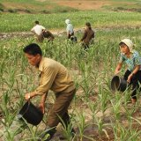 About 70% of North Korea's population of 25 million is food insecure.