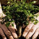 Reforestation in Kerman