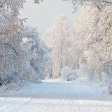 Snow Indulgence