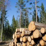 Between 3.5 million and 4 million cubic meters of timber are used by the locals for fuel every year.