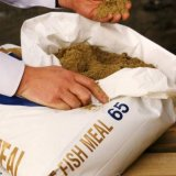 Fishmeal Industry's Investment Potential