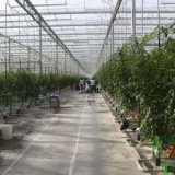 Greenhouse Built in Southern Iran