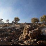 Forest Blaze in Southwest Iran Stopped