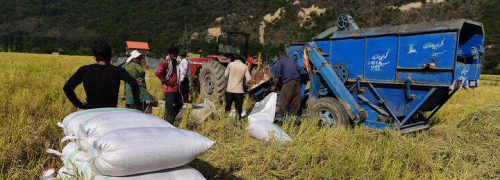 Adequate Urea Fertilizer Available to Farmers