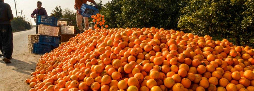 Mazandaran Exports 1K Tons of Citrus Fruits Daily