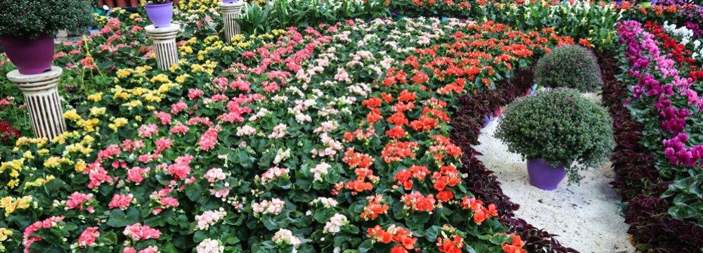 Overseas Flower, Plant Sales Earn $5.3 Million in Q1