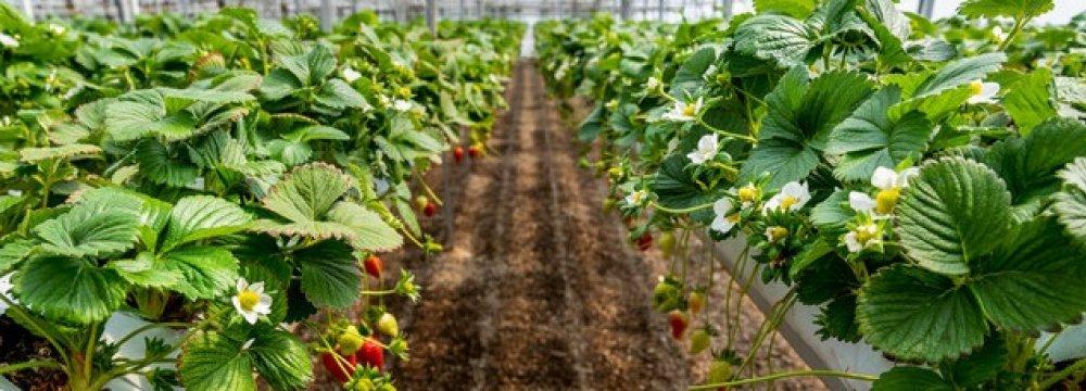 Iran's Greenhouse Areas Near 21K Hectares