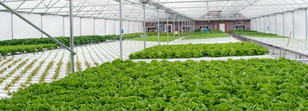 419 Hectares of Greenhouses Renovated