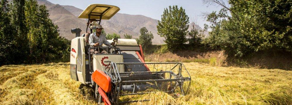 Rice Farming Banned in Khuzestan