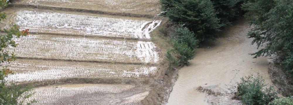 Flood Damage to Mazandaran Agro Sector Estimated at $16m