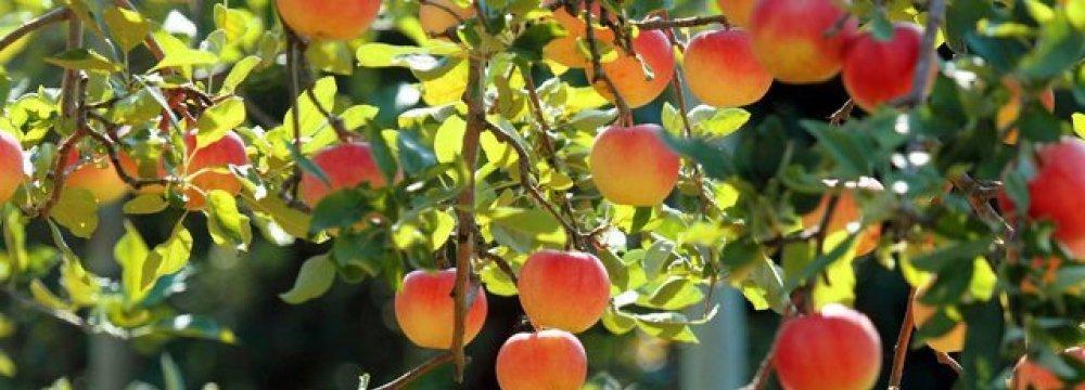Fruit Production Tops 11m Tons