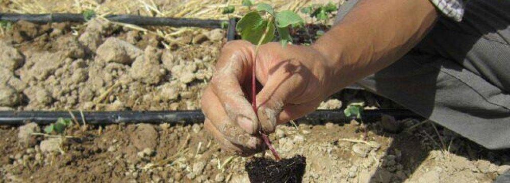 Vegetable Sapling Cultivation Over 214,000 ha