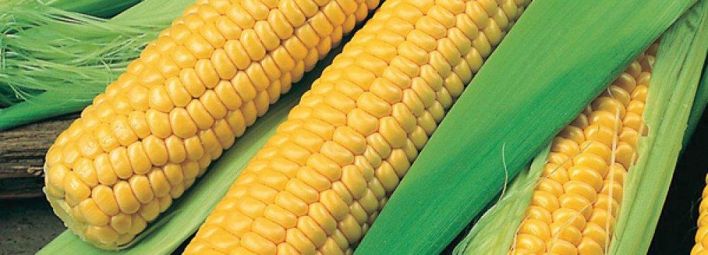 Thailand Biggest Sweet Corn Exporter to Iran