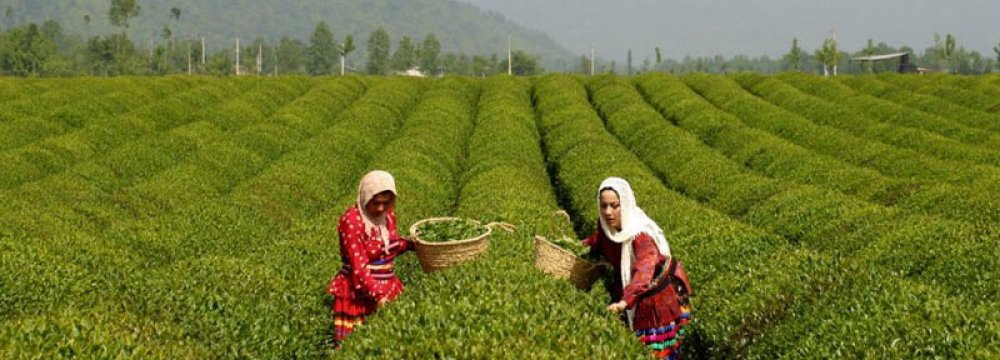 Organic Crop Production to Be Piloted in 4 Provinces of Iran