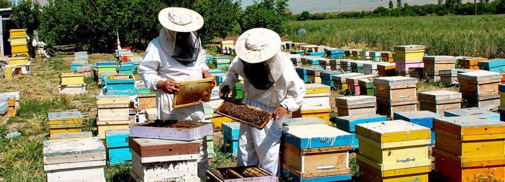 Mandatory Standards for Honey in the Making