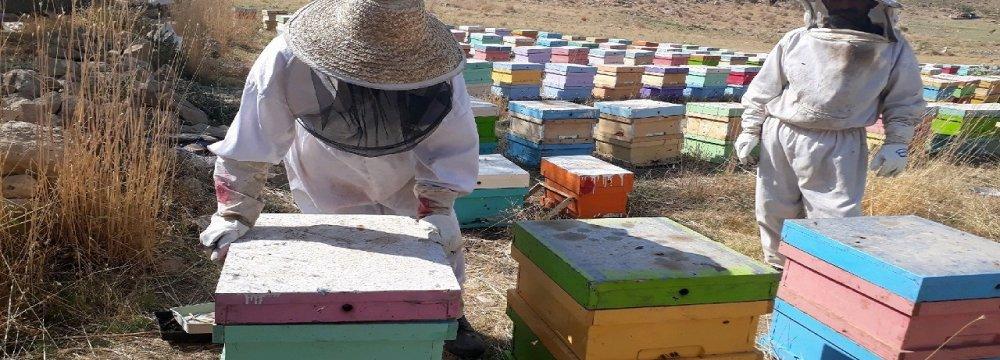 West Azarbaijan Tops Iranian Provinces in Honey Production