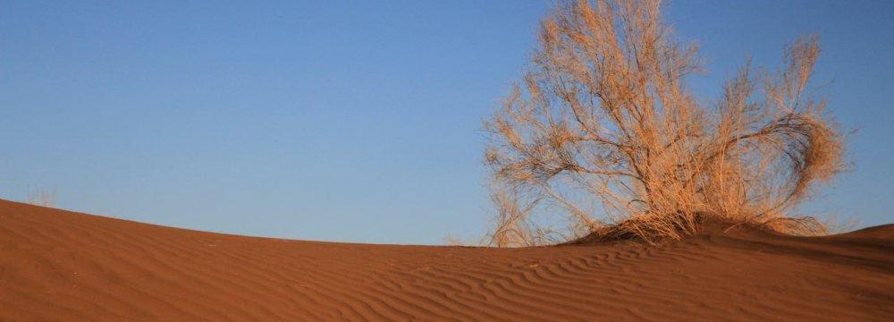 Varzaneh Desert in Photos