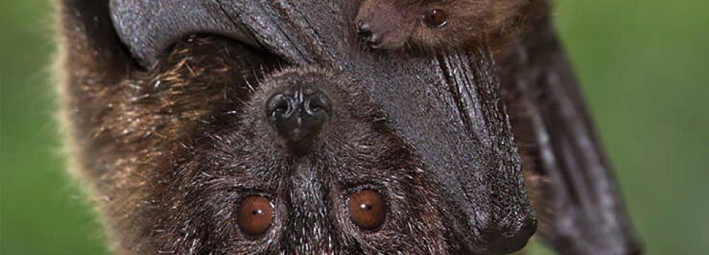 Habitat Destruction Threatens Iranian Bats