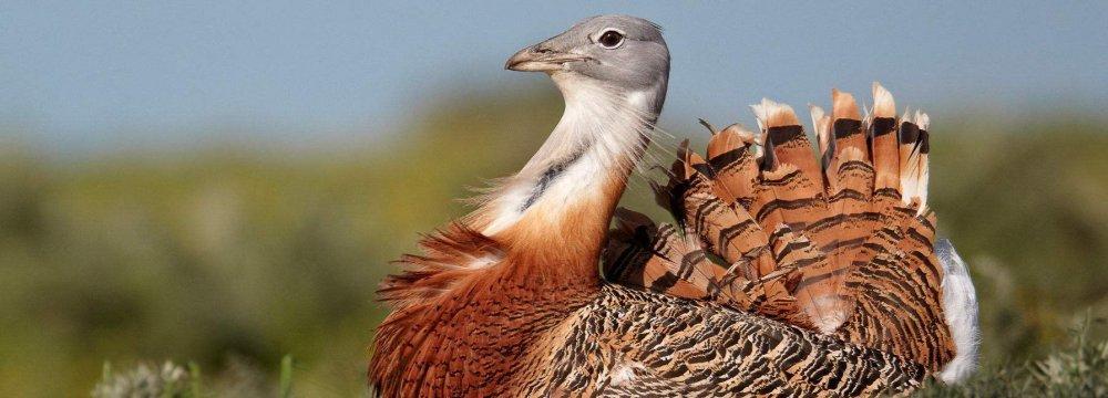 Preservation Plan for Rare Bird  Gets Green Light