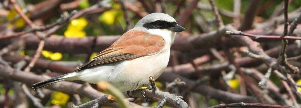 Local Birders Catch Sight of New Species