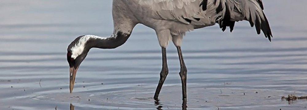 W. Azarbaijan Hosts New Cranes