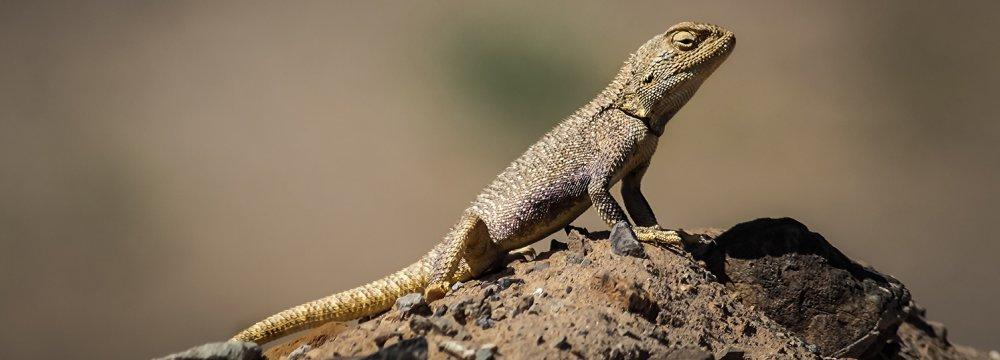 Wildlife Vanishing in Kerman
