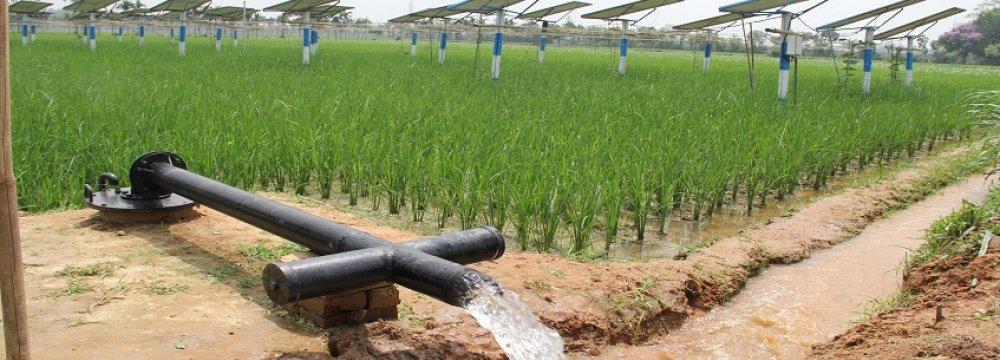 Water-Intensive Crops