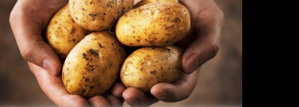 Requiem for Potatoes!