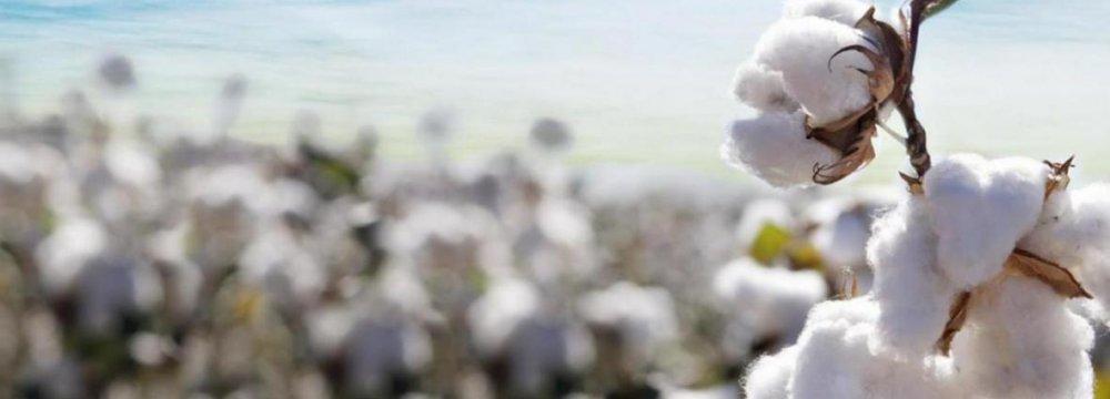 Gov't Plans to Revive Cotton Farming