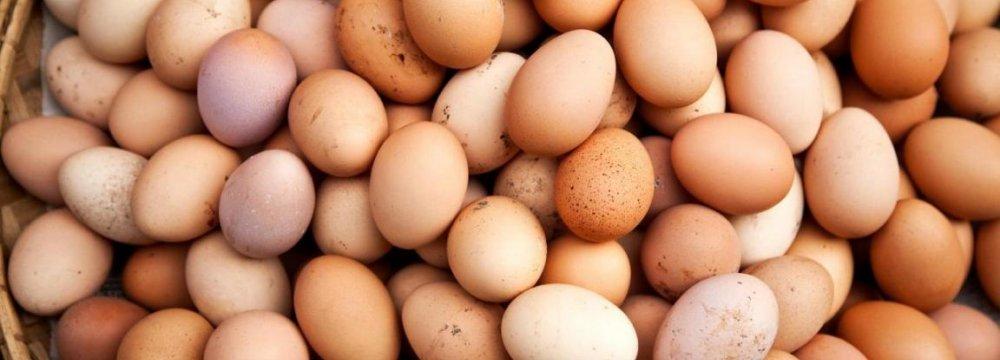 Khorasan Razavi Egg Production