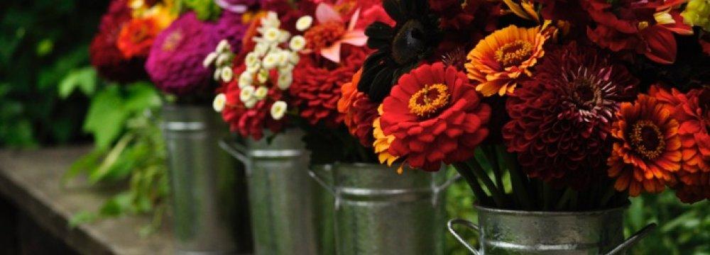 Flower, Ornamental Plant Exports