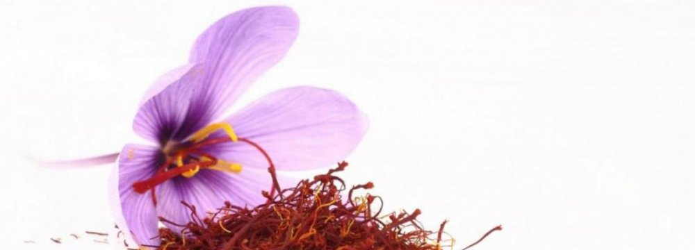 Saffron Export Up